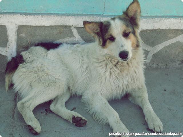 Perros de Cotagaita - Gambeteandoconladepalo
