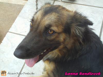 Lanna Bandicoot Atualmente. (1 Ano)
