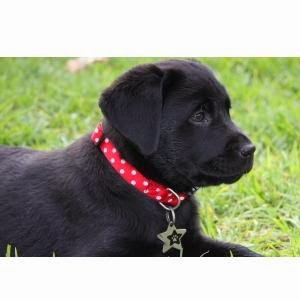 best puppy dog collar training