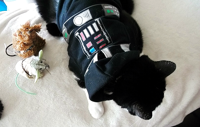 Darth Truffles Star Wars Cats Halloween
