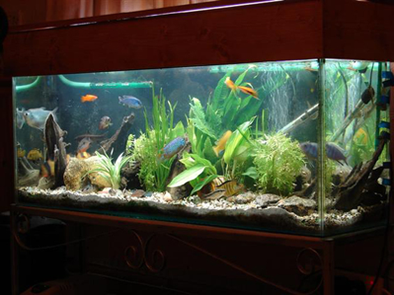 how to setting up fish tank for keeping aquarium fishtropical aquarium tank 565x423
