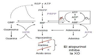 acido urico cafe alimentos que alteran el acido urico rangos normales de acido urico en sangre