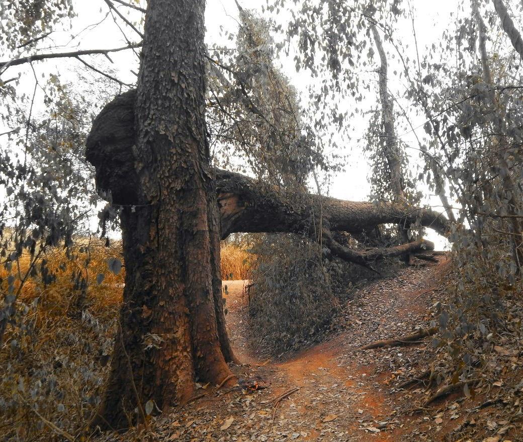 O acesso até a margem do Rio Jaguari é feito por uma trilha que serpenteia a mata ciliar da região. Uma árvore parcialmente tombada forma um pórtico informal de um parque que sequer existe no papel, mas é frequentado por ciclistas, motoqueiros e amantes da natureza.