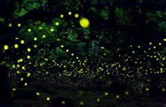 Bintan mangrove tour sunflies Tour