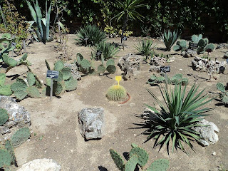 Among the cacti in Balchik Botanical Garden