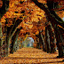 Autumn Leaves Alley Nature Wallpaper