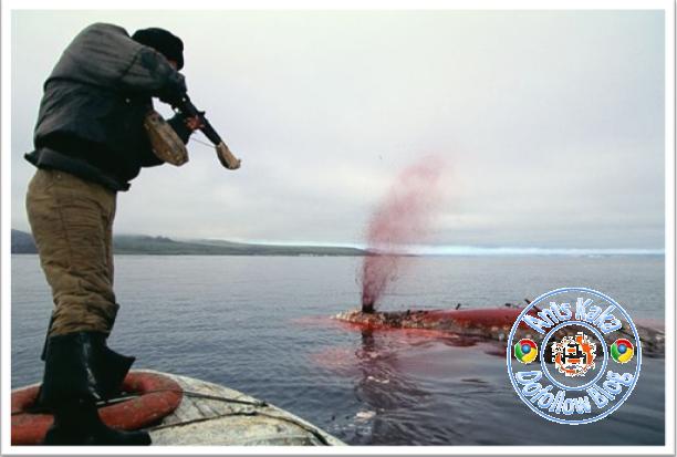 Perburuan Hewan Laut Yang Di Lindungi