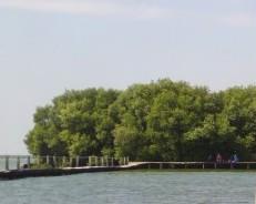 Wisata Alam dan Reiligi di Hutan Mangrove Demak