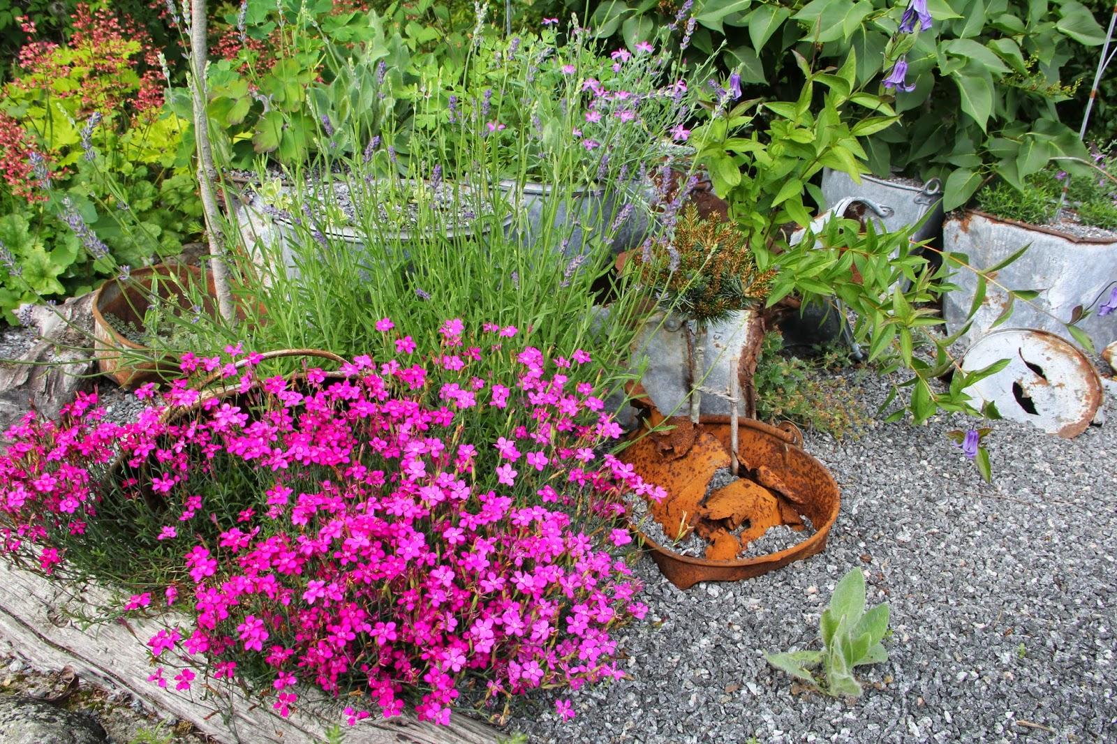 Visningsträdgården Hällans trädgårdsblogg: november 2014