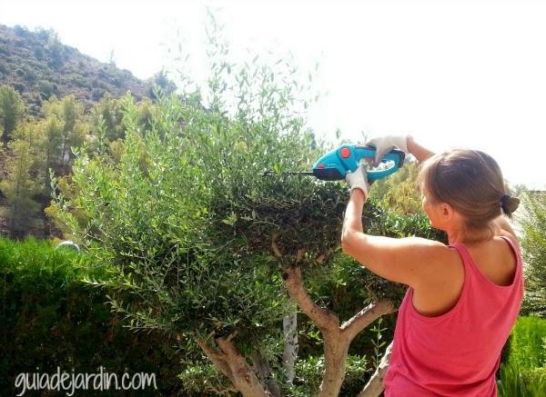 Podando el olivo