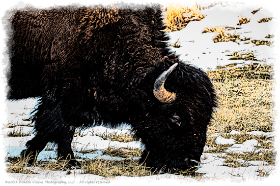 Painted Buffalo by Dakota Visions Photography #filterforge #CusterStatePark