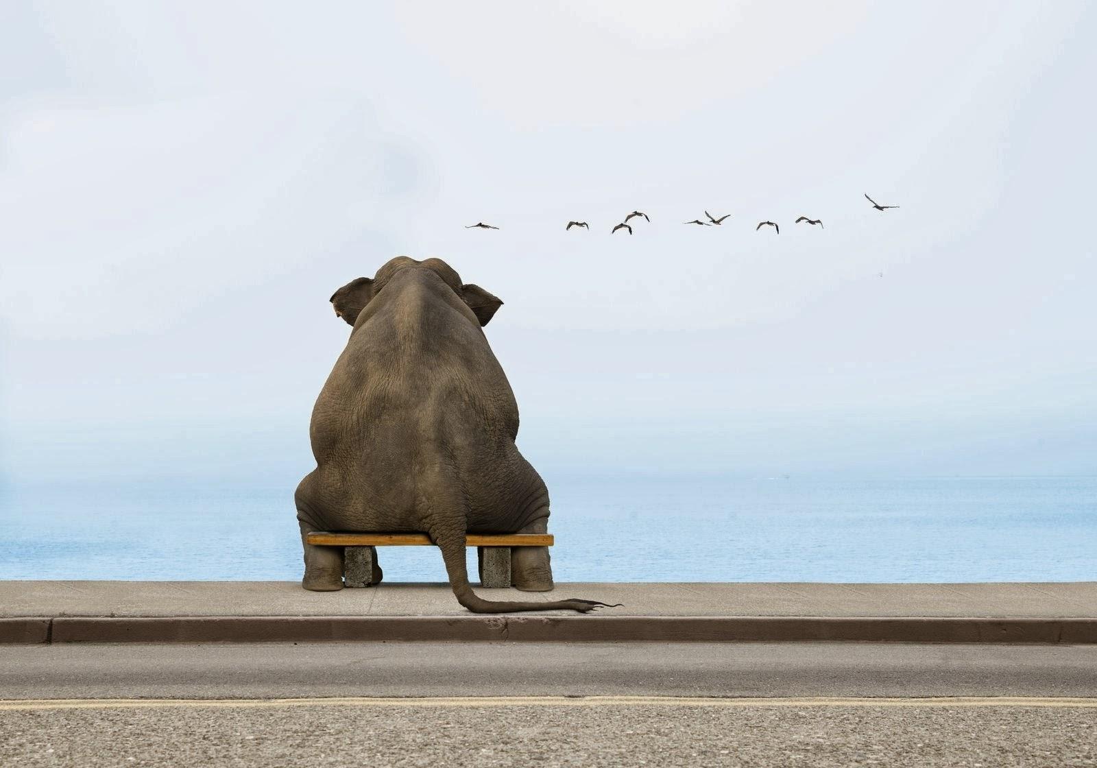 olifanten achtergronden bureaublad - photo #23