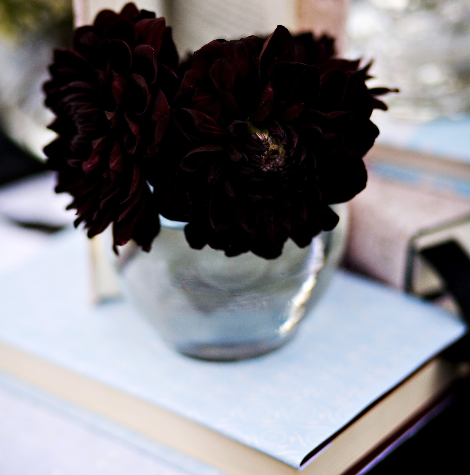 Beautiful Wallpapers Real Black Flowers images photographs backgrounds