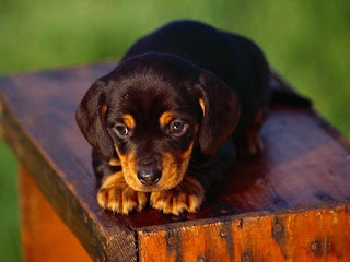 cute-Puppies-photos-pictures-images-pics