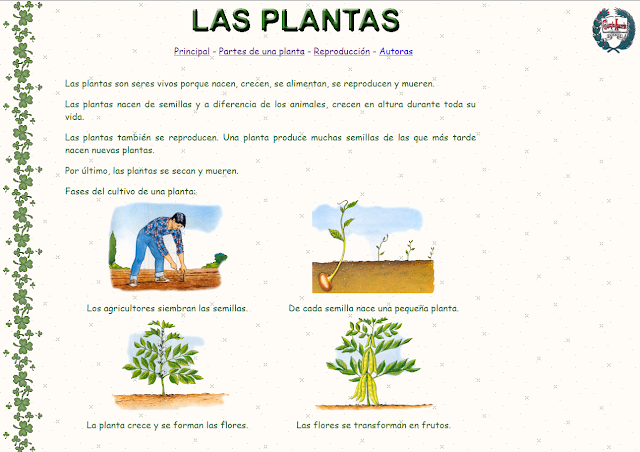 Aprender es divertido 3 las plantas - Tipos de plantas y sus cuidados ...