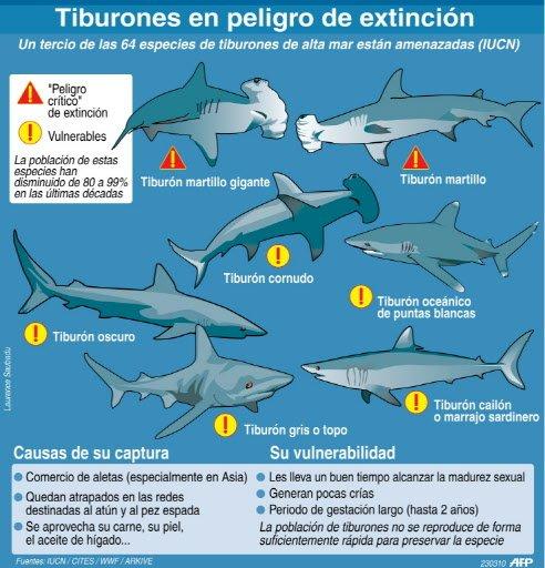 ZOOLOGÍA Y FISIOLOGÍA ANIMAL : TIBURONES