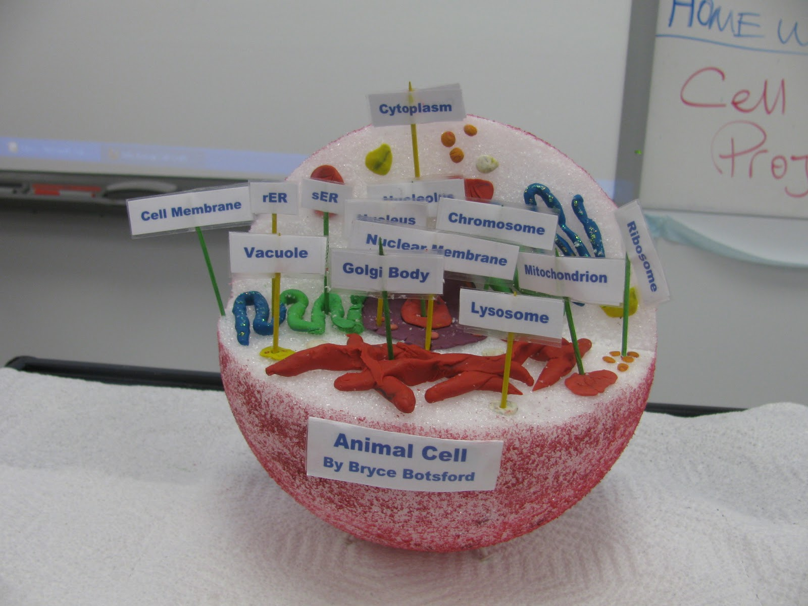 Animal Cell School Project Ideas http://mscorson.blogspot.com/2011/09/cell-model-project.html