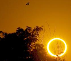 ~ SUN MUSINGS ~
