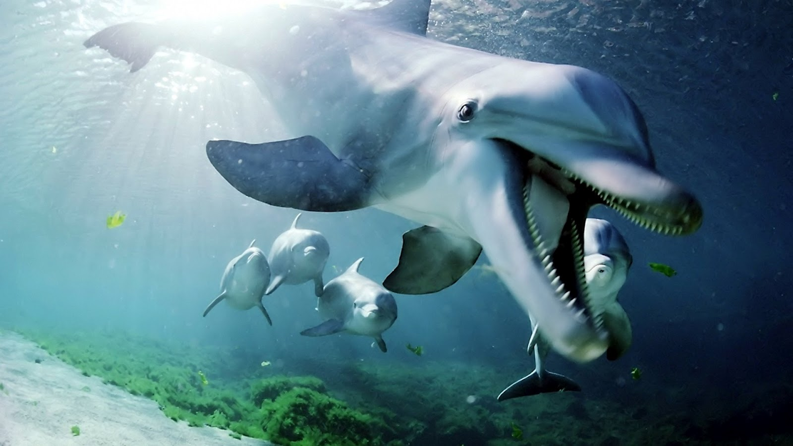 Dolphin | Full HD Desktop Wallpapers - 133.4KB