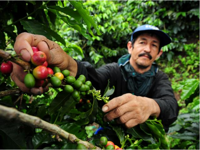 Aprueban proyecto que incorpora a la selva en alcances de Sierra Exportadora