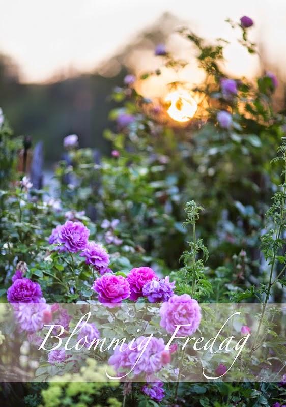 Blommiga fredag