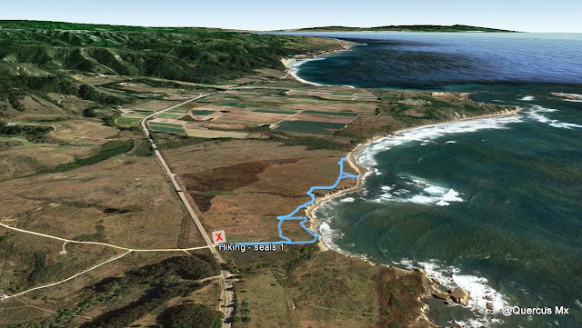 Segunda Ruta en Ano Nuevo State Reserve