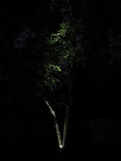 LED lighting uplighting a tree landscaping shrubbery Toronto