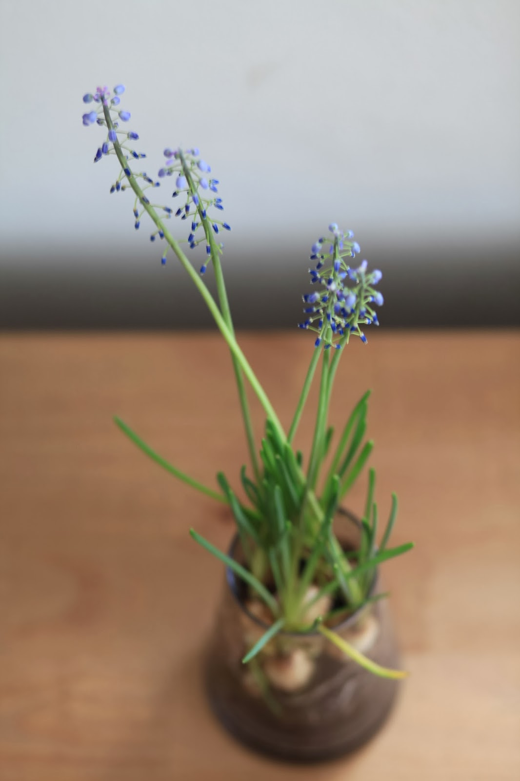 deko hol dir den fr hling ins haus oder zwiebelblumen im glas. Black Bedroom Furniture Sets. Home Design Ideas