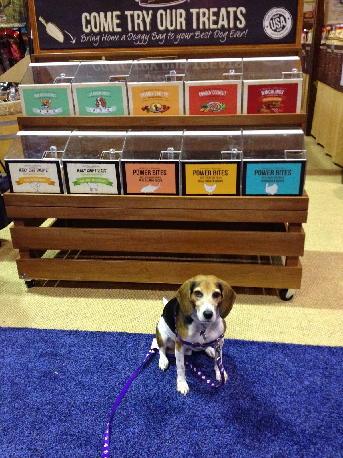 Life With Beagle: Global Pet Expo: Photos and observations
