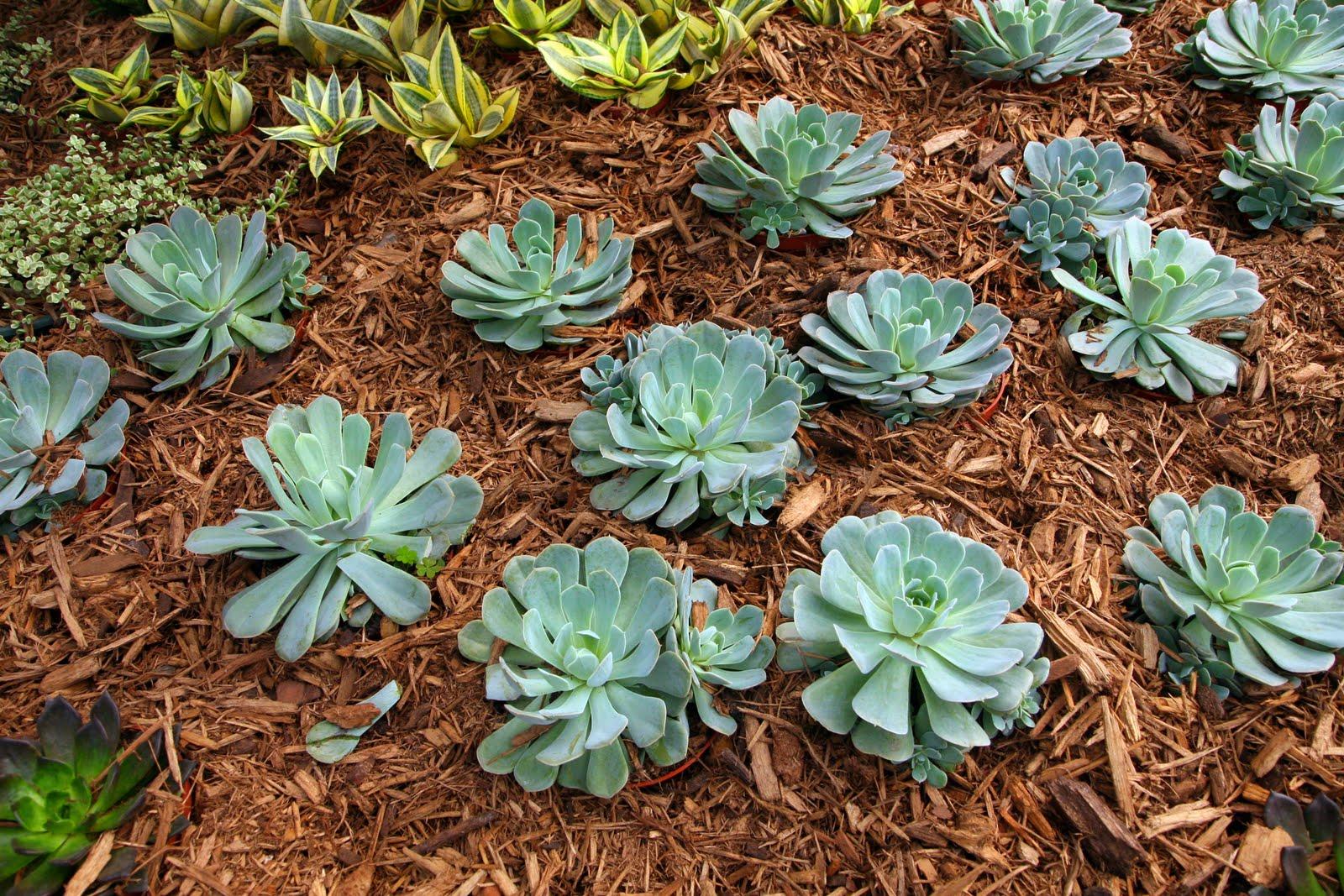 The Garden Plot Drought tolerant plants that can beat the heat