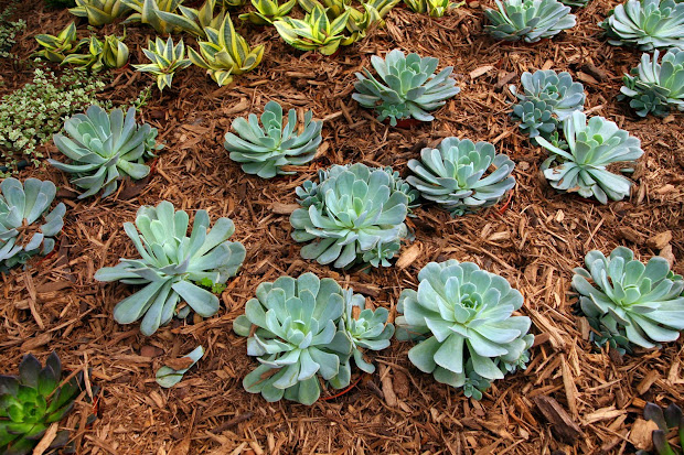 garden plot drought tolerant