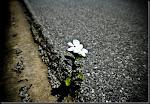 la resiliente