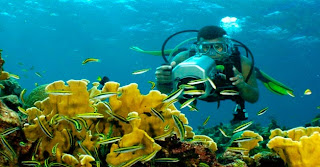 roatan-diving-buceo