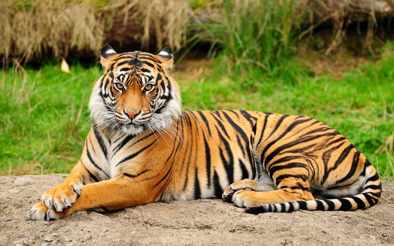 LOS ANIMALES: LOS ANIMALES VERTEBRADOS