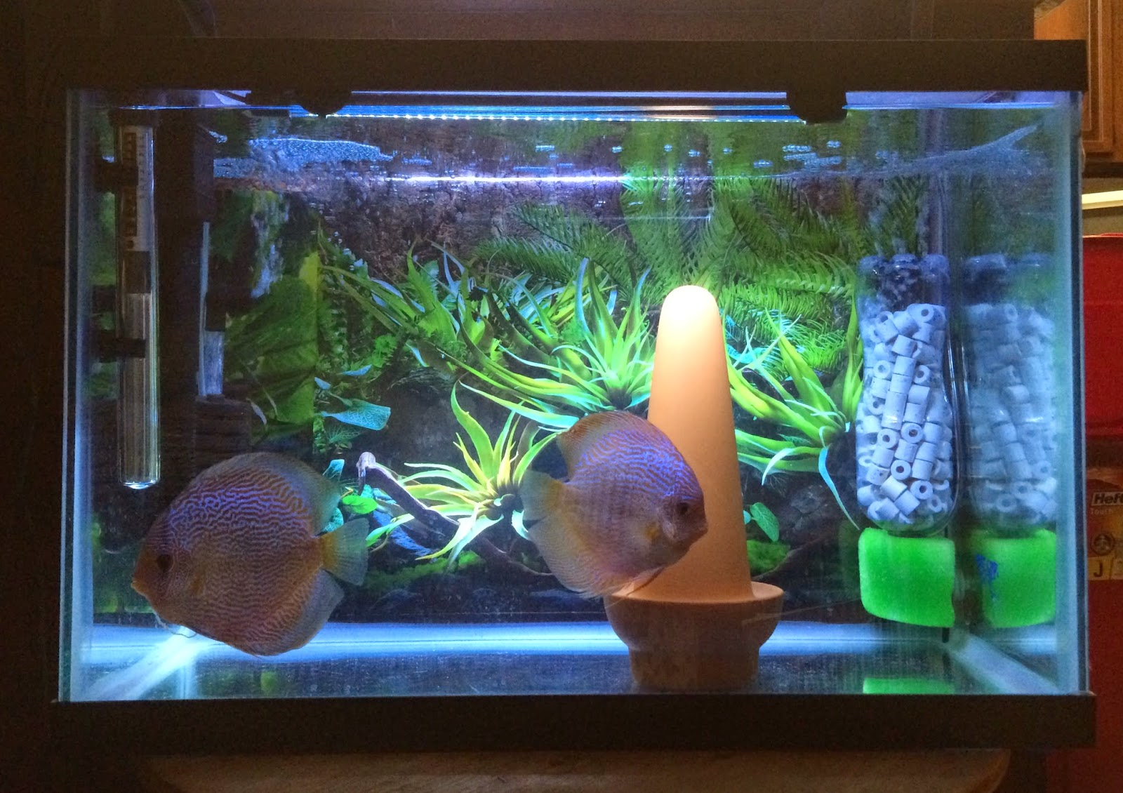 Kaylen S Discus Blog Diy Aquarium Filter