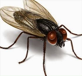 Image result for lalat kartun