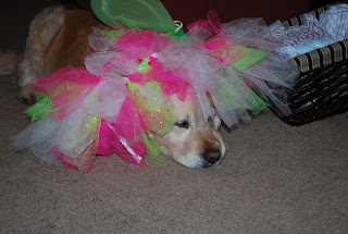 joys of the family dog, dressing up the family dog, golden retrievers and kids