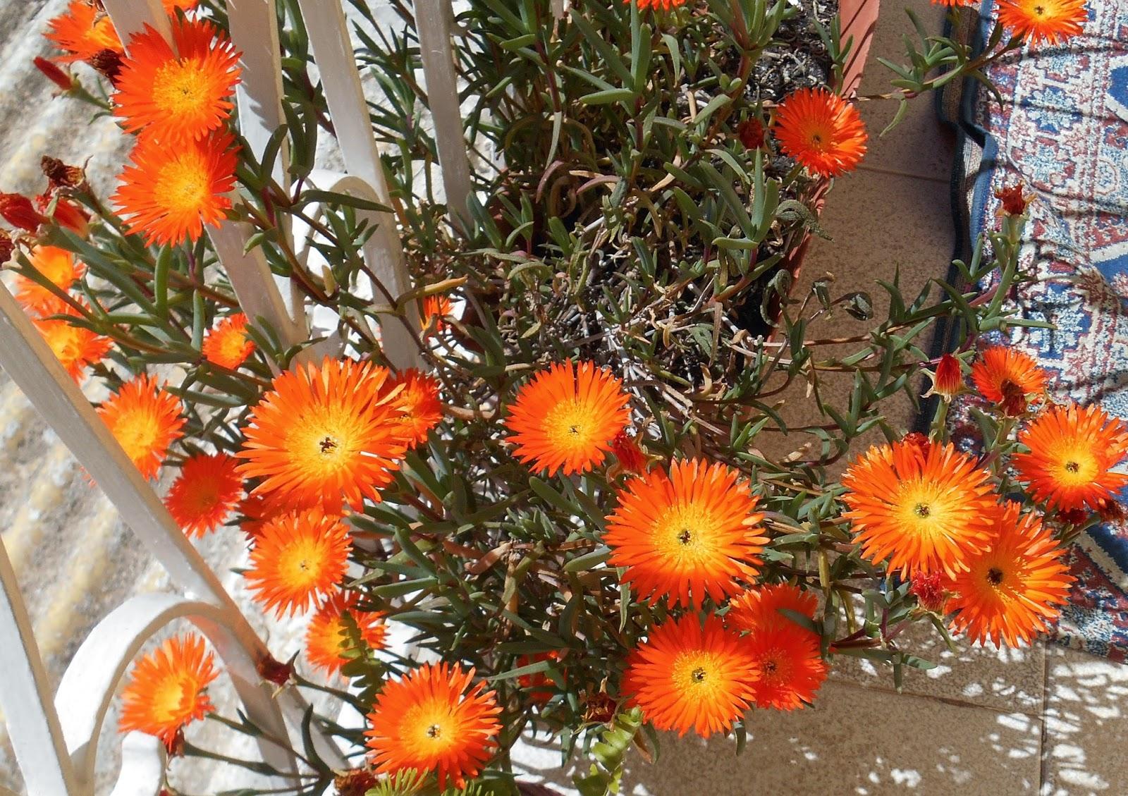 erbe grasse fiorite