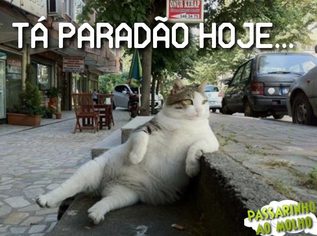 gato sentado, imagem