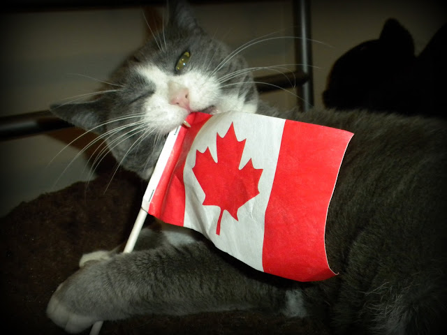 Go Canada Go...? by Little Cat Photography from flickr (CC-NC-ND)