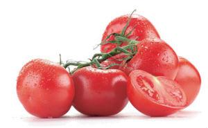 tomate-prevenir-cancro-cancer