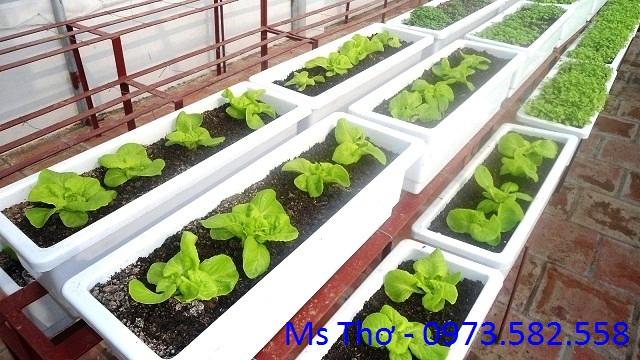 Đất sạch tribat trồng gia vị