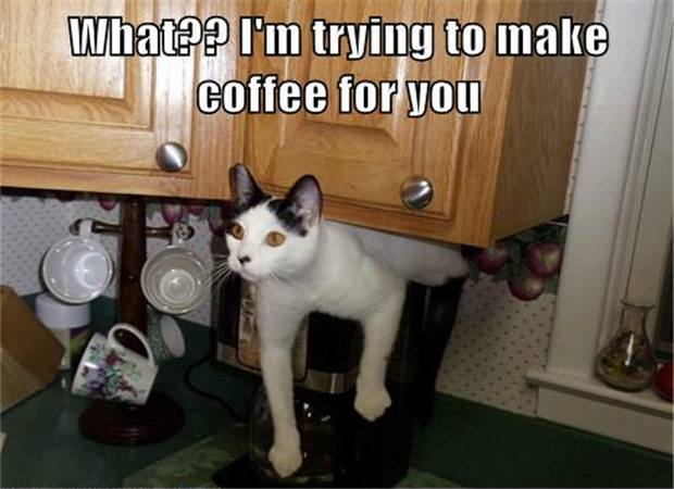 Cute and Funny Pictures and more: Cat making coffee