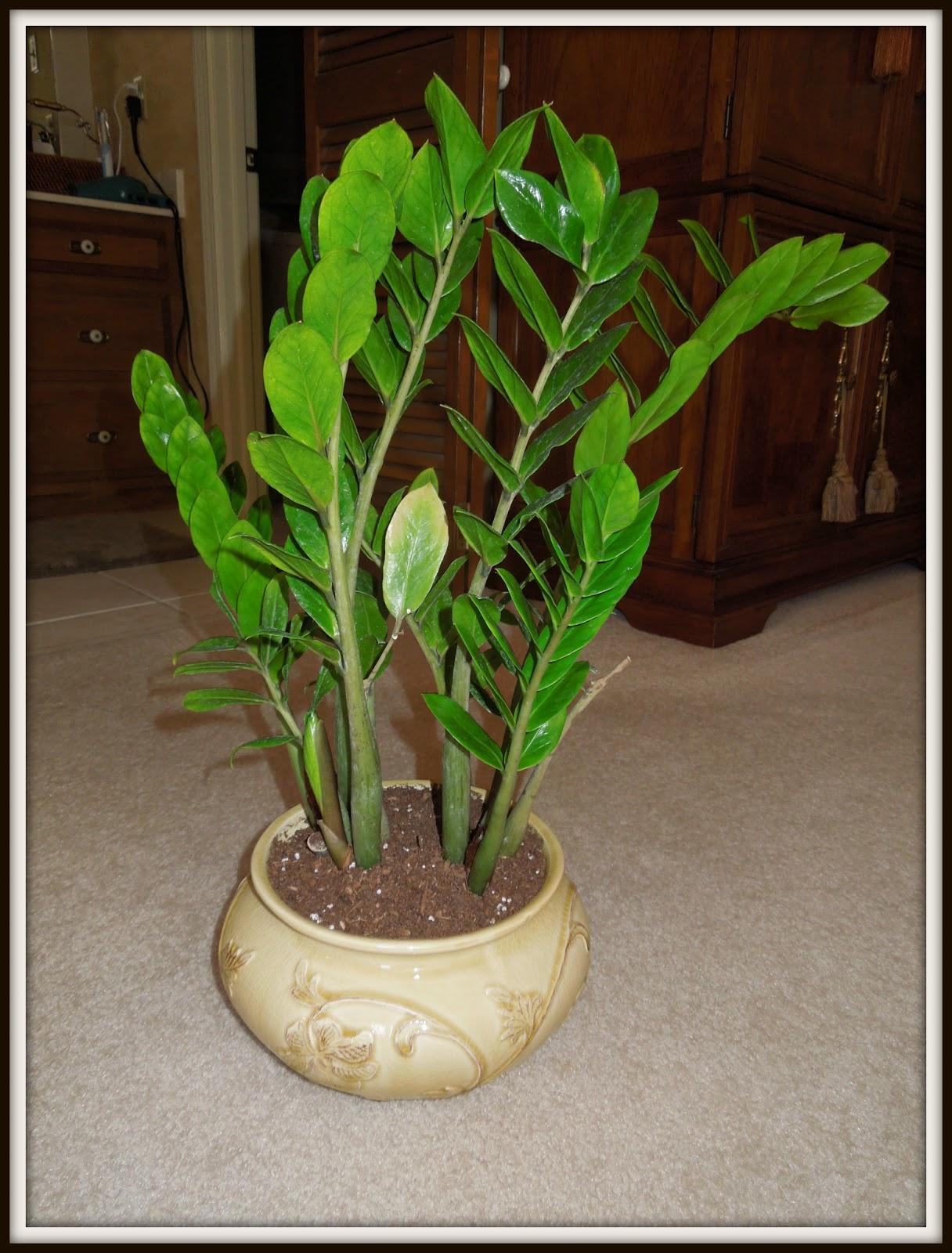 Домашние растения. Комнатные