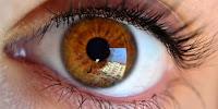 makanan, yang, dapat, meningkatkan, daya, lihat, mata, anda