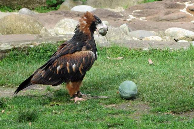 Động vật ở Healesville Sanctuary