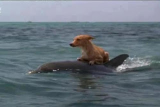 save dog dolphines,