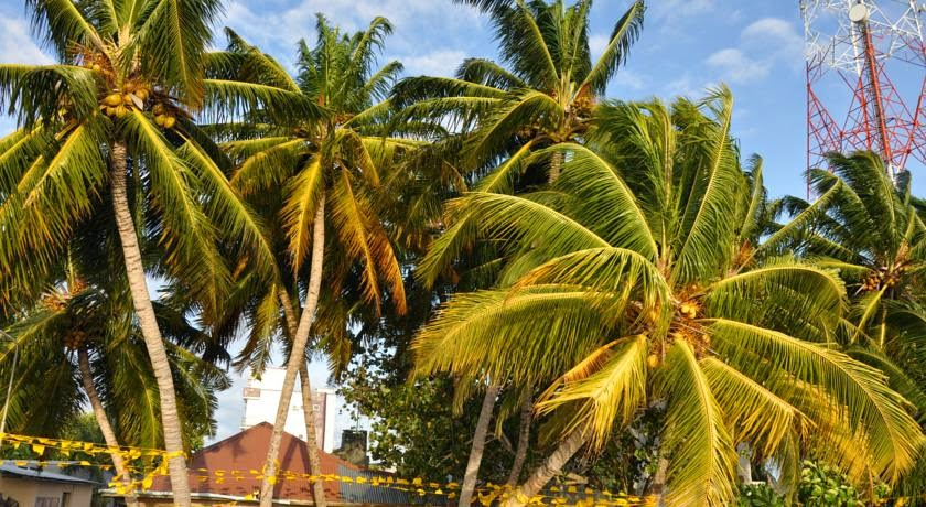 Banana Residence Rasdhoo Maldives