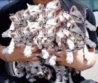 dozen kitten pile