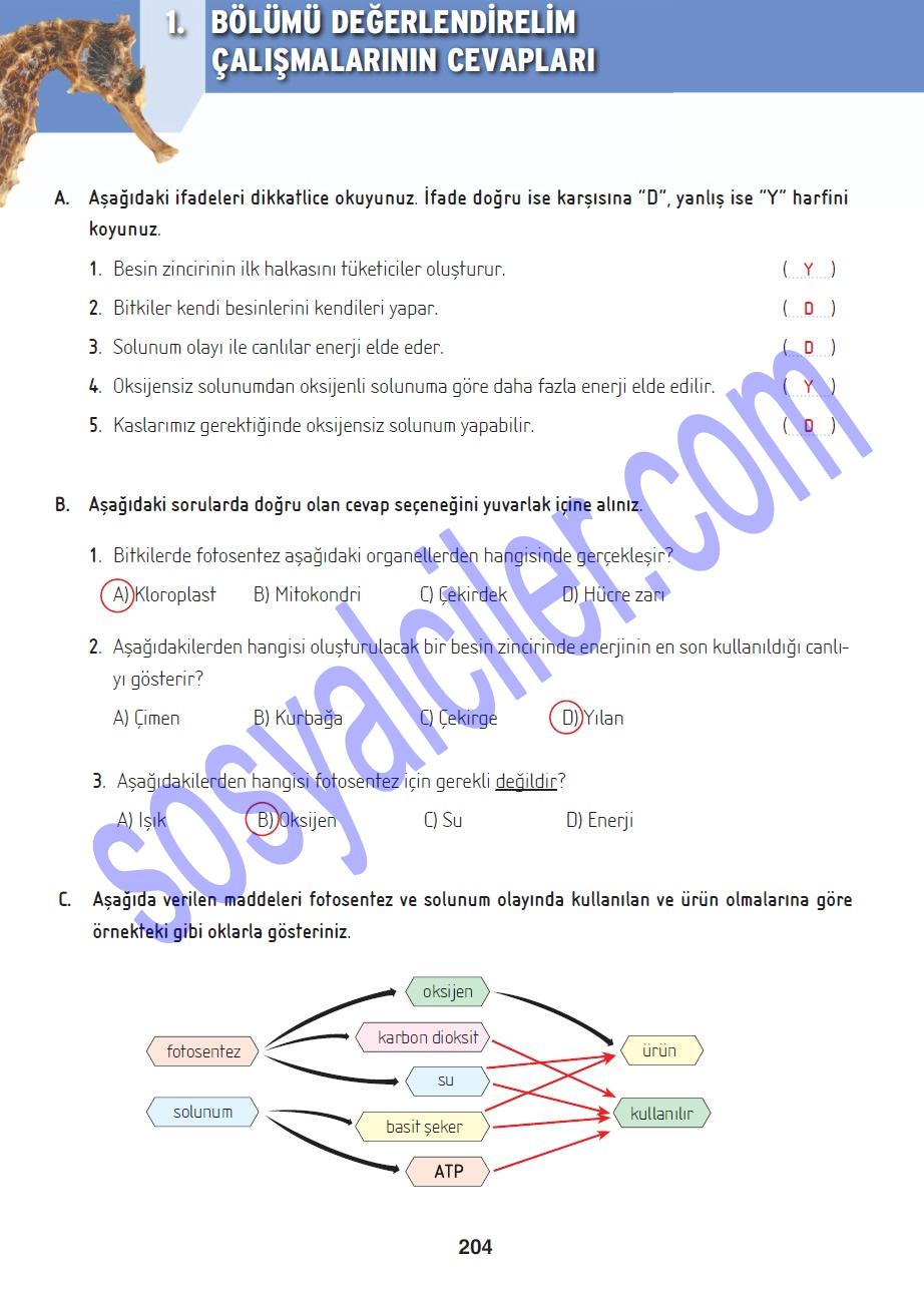 Fen ve teknoloji ders kitabi sayfa 204′ün cevaplari altın kitaplar